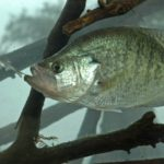 How to Catch Crappie on Jig Poles