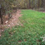 Why to Fertilize Your Deer