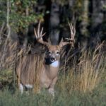 Portland Outdoors' Top Secret Deer Scents, Scent Defense Products, Bio Shield and Fog Zero
