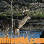 Go Early for Buck Deer Day 3: Early Season Deer Tactics