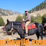 Enjoying a First Time Backcountry Elk Hunt Day 1: Finding a Backcountry Elk Outfitter