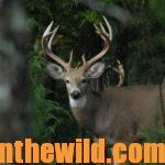 Taking Blackpowder Buck Deer Day 5: Natural Barriers and Weather Difficulties That Keep Deer from Being Taken