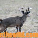 Learn Some of the Sounds Deer Make to Hunt Smarter Day 3: Why Use the Contact and Fawn Calls for Deer