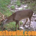 Tree Stands – Friends or Foes for Deer Hunters Day 2: What about Deer Hunters and Tree Steps