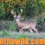 Ten Secrets to Finding and Taking Trophy Buck Deer Day 4: Secrets #5 and #6 – Don't Bet on Your Memory or Act Stupid and Secret # 7 – Change Times to Hunt Deer