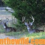 Ten Secrets to Finding and Taking Trophy Buck Deer Day 5: Secrets #8, 9 & 10 – Learn Places to Bag Big Deer – Croplands, Roads and Cattle Pastures