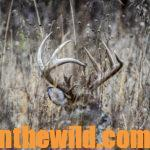 Can You Identify the Most Important Information about Deer Tracks?