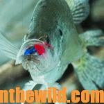 How to Find and Catch Prespawn Crappie Day 3: Fishing Watershed Lakes and Rivers for Prespawn Crappie with Guide Brad Whitehead