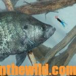 Prepare Now to Catch Big April Crappie Day 3: Know More Tips for Catching Big April Crappie