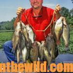 Fish Jigging Spoons to Catch More Crappie Day 2: Why Modify a Jigging Spoon for Crappie
