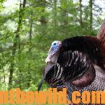 Lessons Learned to Take Bad Turkeys with J. Wayne Fears Day 2: Hunting the Reincarnation Turkey
