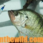 Do It Yourself Fishing Lures Day 1: Why to Fish Handmade Knitting Yarn Jigs for Crappie