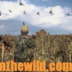 How to Be a Better Dove Hunter Day 3: Learn about Guns and Shells for Dove Hunting