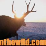 Brenda Valentine Hunts Mule Day 4: A Wyoming Mule Deer for Brenda Valentine