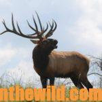 The Hunt for Hook: The Record Book Bow Elk with Pat Reeve Day 2: The Beginning of Pat Reeve's Kentucky Elk Hunt for Hook