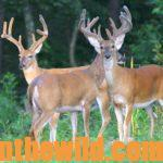 Getting Ready for Bowhunting Deer Season Day 1: Understanding the Importance of Planting to Get Ready to Bowhunt Deer