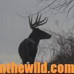 Silent Stalking for Deer Helps You Take More Bucks Day 1: Stalk Hunting Buck Deer in the Woods