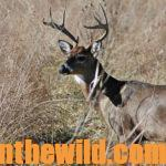 Alan Benton Shares his Deer Hunting Secrets Day 4: Alan Benton Asks – What or Who Do You Smell Like
