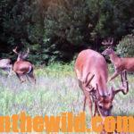 Alan Benton Shares his Deer Hunting Secrets Day 3: Alan Benton has Learned the Value of Hunting Deer on Small Properties