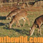 Hunting the Deer Rut Day 1: Hunt the Doe Deer and Learn What They Can Teach Us in the Rut