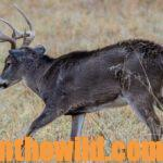 Hunt the Storm Fronts for Deer Day 5: Hunting from Tree Stands and Tips for Taking Deer in Bad Weather