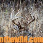 Hunt the Storm Fronts for Deer Day 4: Hunting Deer Beds for White-tailed Deer