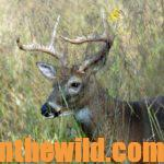 Why, Where and How to Find Buck Deer in Funnels Day 5: Learning How Habitat Changes Create Funnels Deer Use