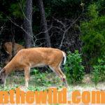How to Prepare Your Hunting Lands Now for Deer Season Day 2: What to Plant in a Green Field for Deer