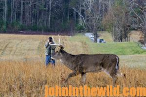 Photographing a deer in the field