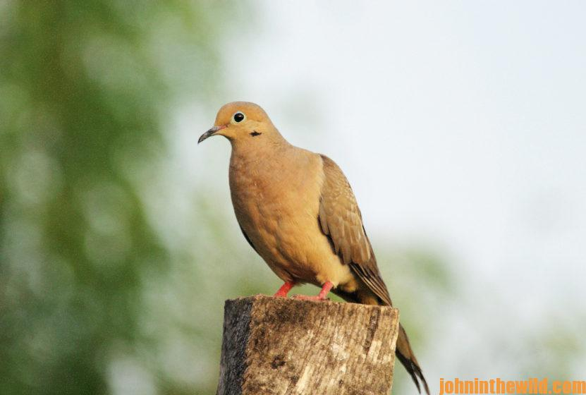 Dove perched on a tree