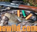A downed dove, shells, and a rifle