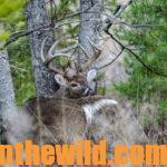 Take the Bowhunter's Deer Quiz Day 4: What's Next After Bow Shooting a Deer