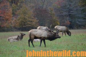 A group of elk in the field