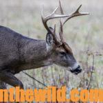 Understand a Deer's Body Language Day 1: Looking at Deer Movement
