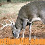 Understand a Deer's Body Language Day 5: Hunting Calm Deer